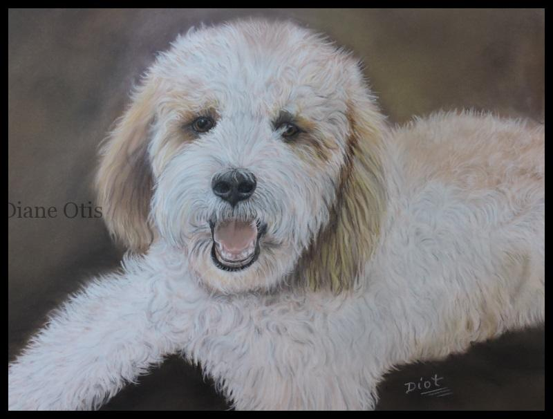 Golden Doodle paste; 12x16 po - Axcel, vendu